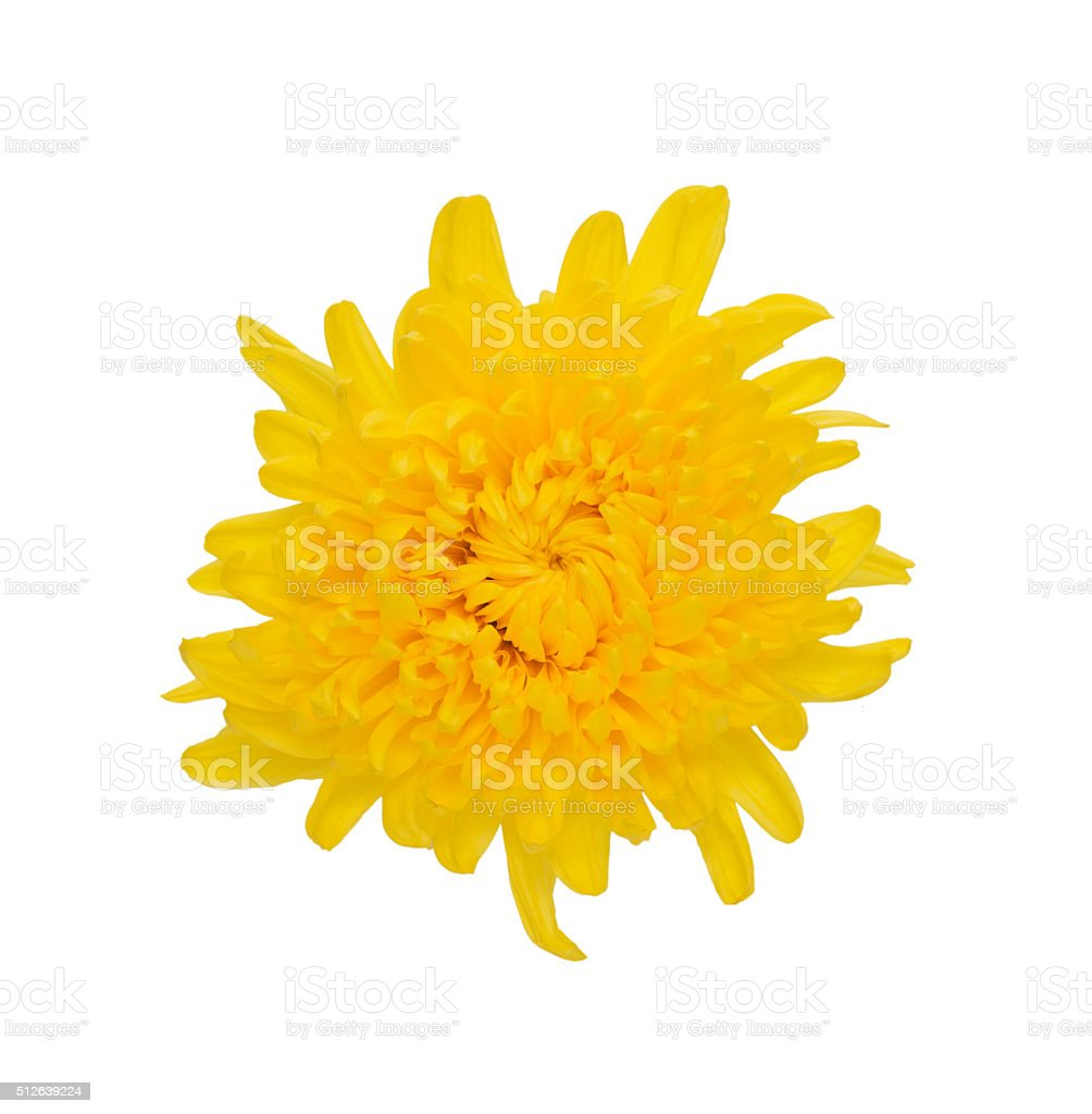 Yellow flower  isolated on white background with clipping path stock photo