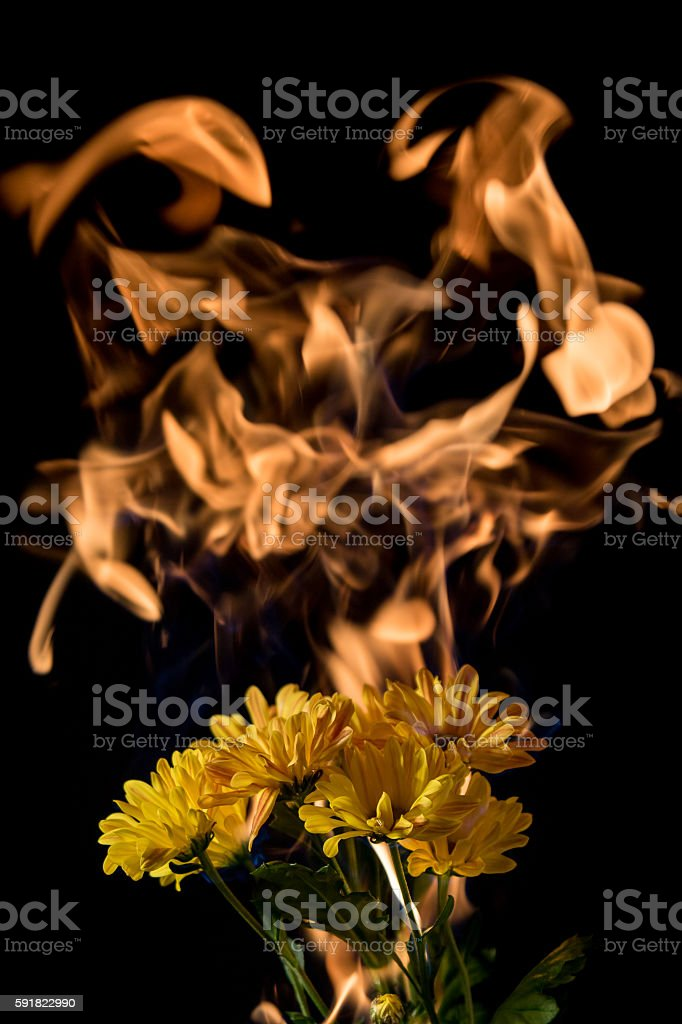 yellow flower on fire stock photo