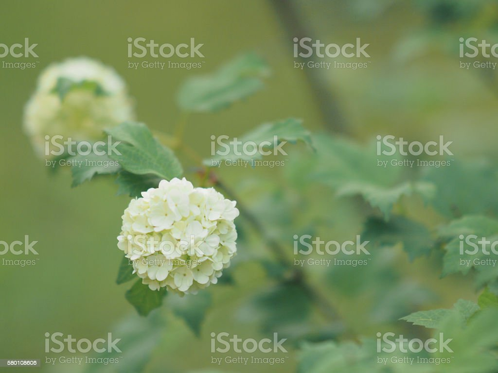 Yellow flower on green background stock photo