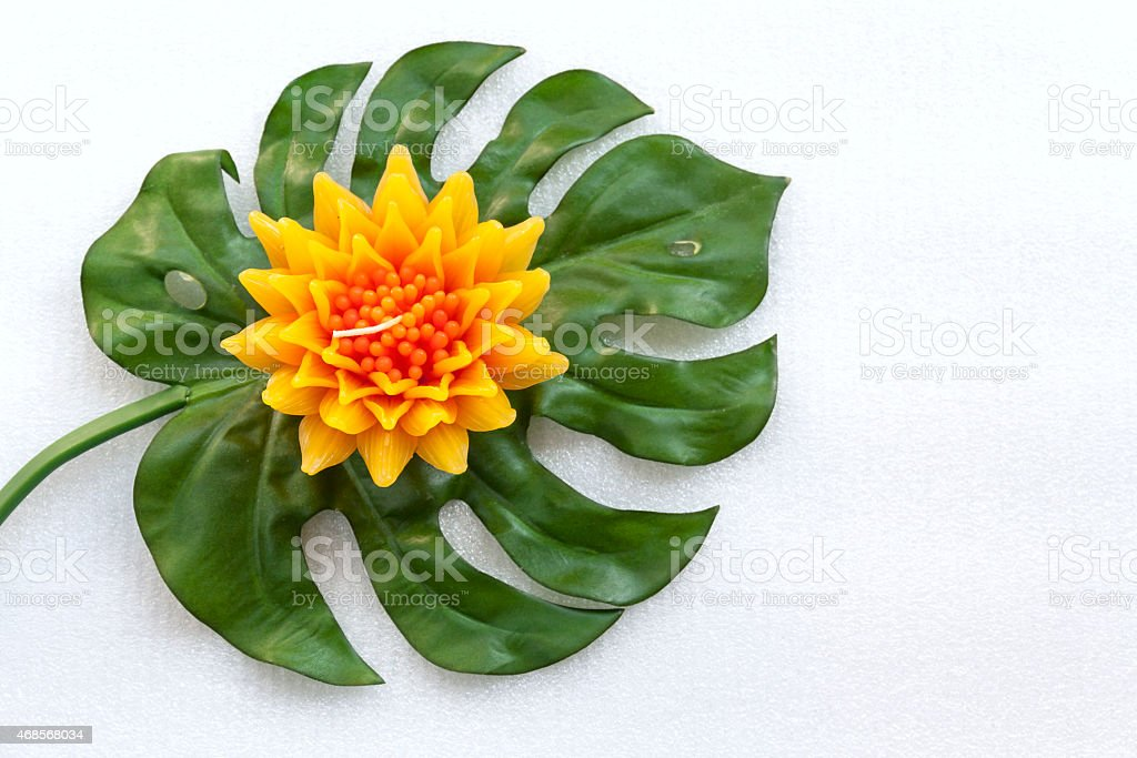 Yellow flower on green leaf royalty-free stock photo