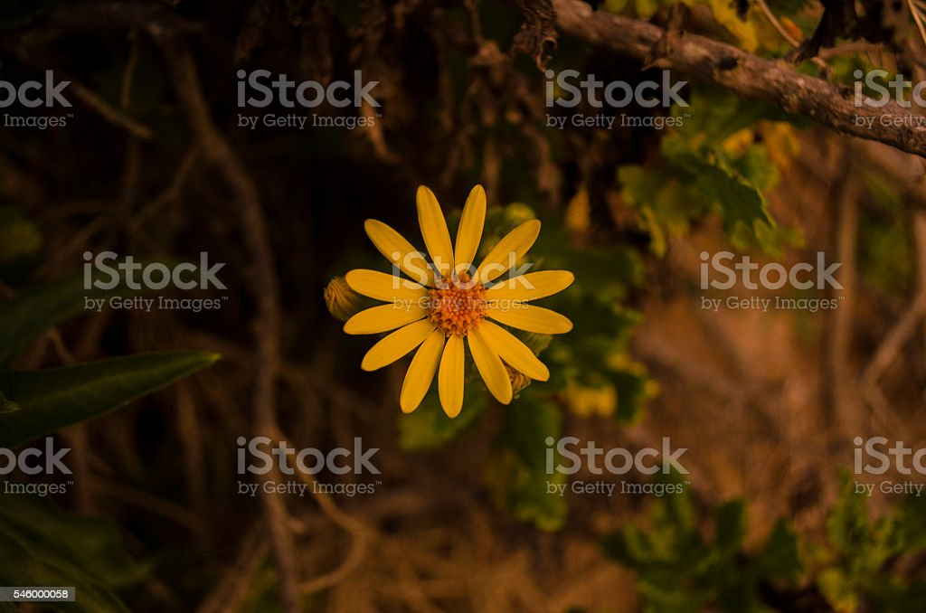 Yellow Flower on the hill stock photo