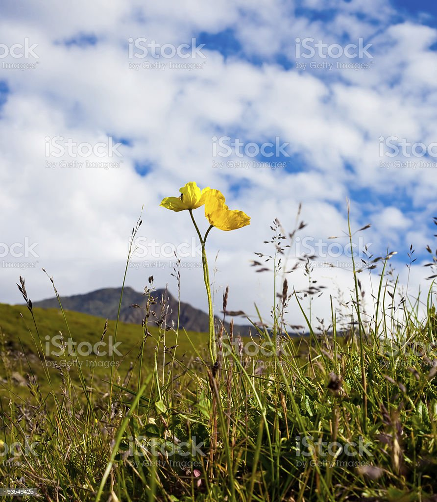 yellow flower over mountains stock photo