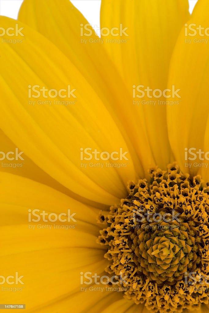 Yellow Flower royalty-free stock photo