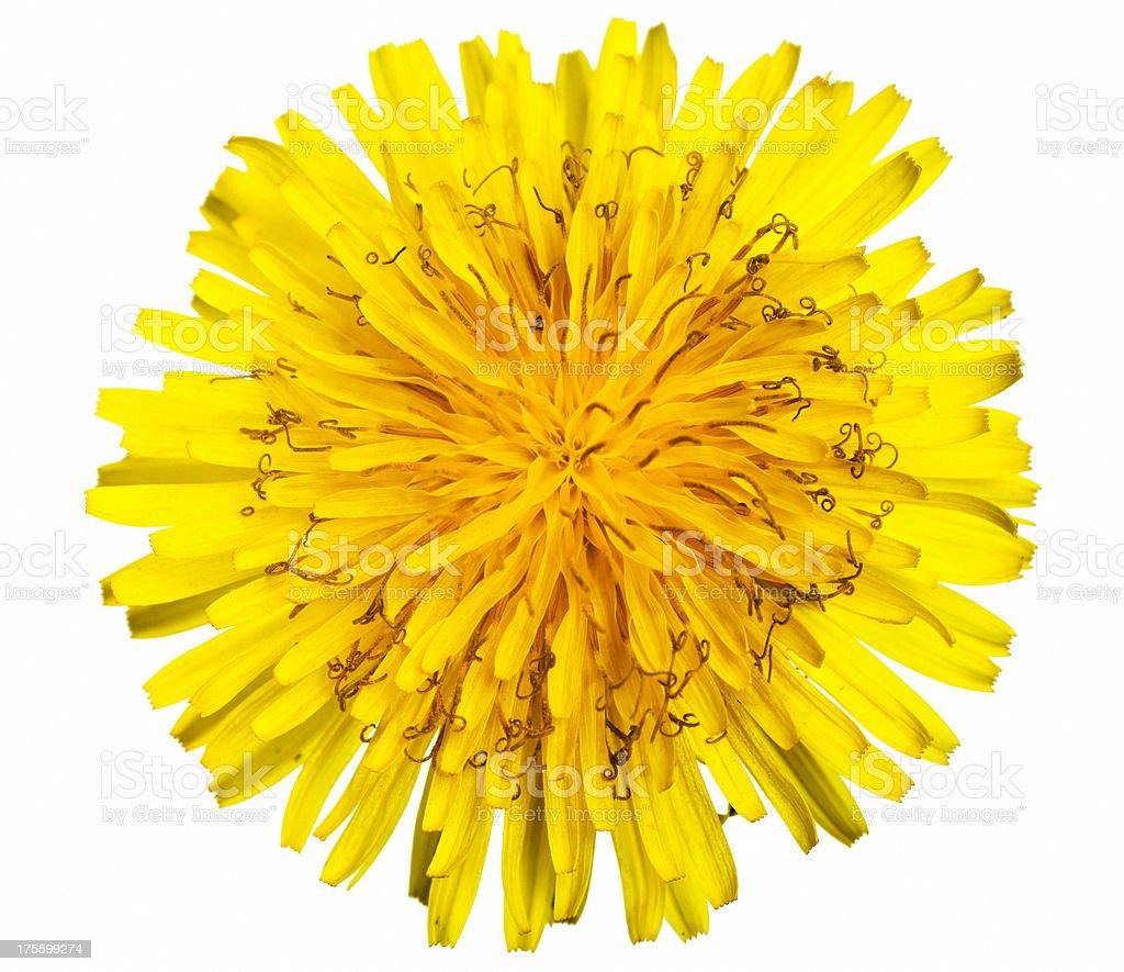 Yellow Flower. stock photo