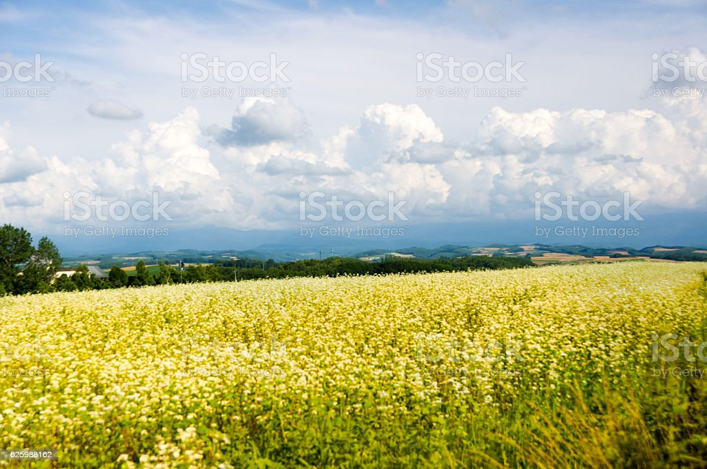 Yellow flower prairie and cloud stock photo