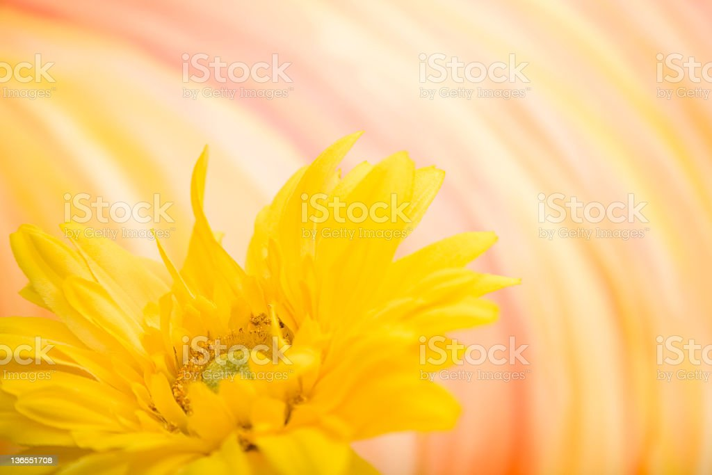 Yellow flower with abstract art. royalty-free stock photo
