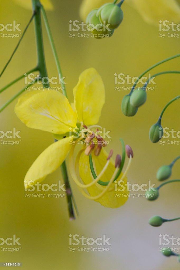 Flor amarela com fundo amarelo foto royalty-free