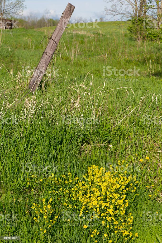 Yellow Flowers and Fencepost royalty-free stock photo