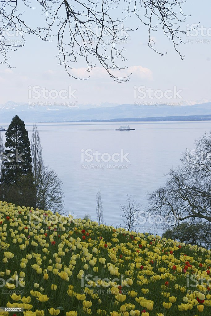 Yellow flowers and sea royalty-free stock photo