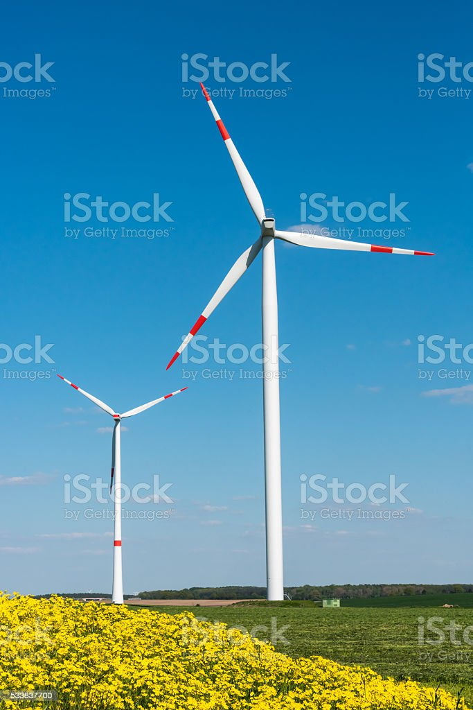 Yellow flowers and windwheels stock photo