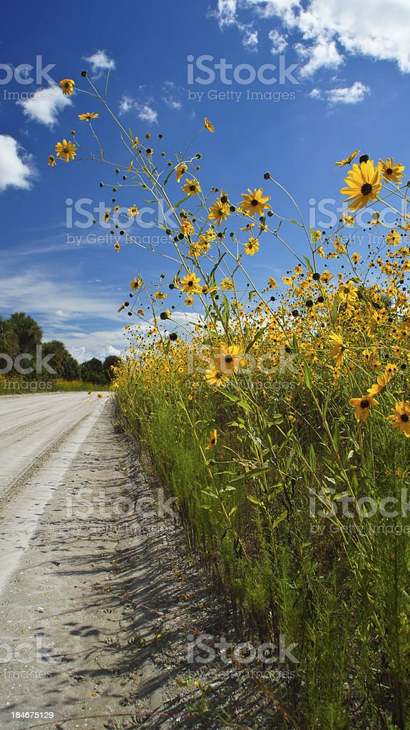 Yellow Flowers by the Road royalty-free stock photo