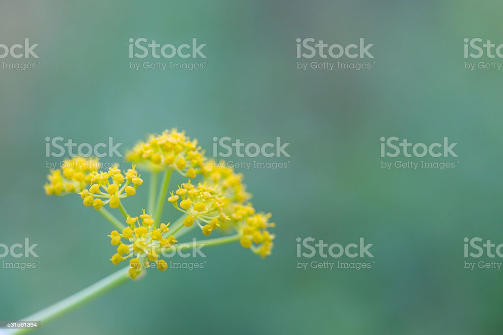 Yellow flowers. Close up stock photo