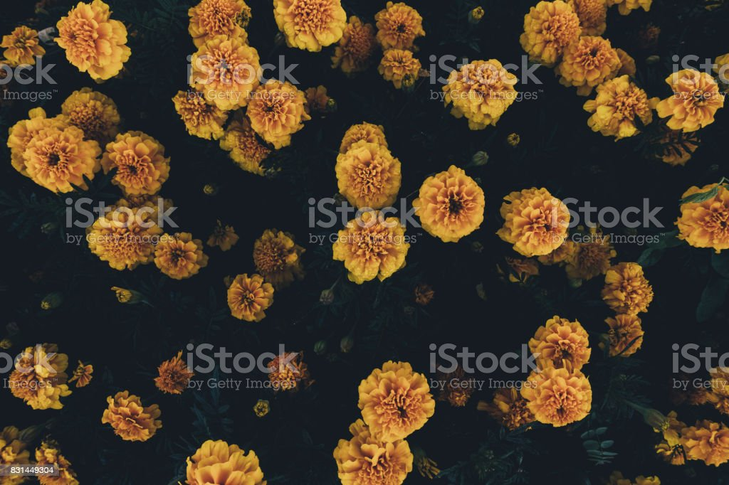 Yellow Flowers From Above stock photo