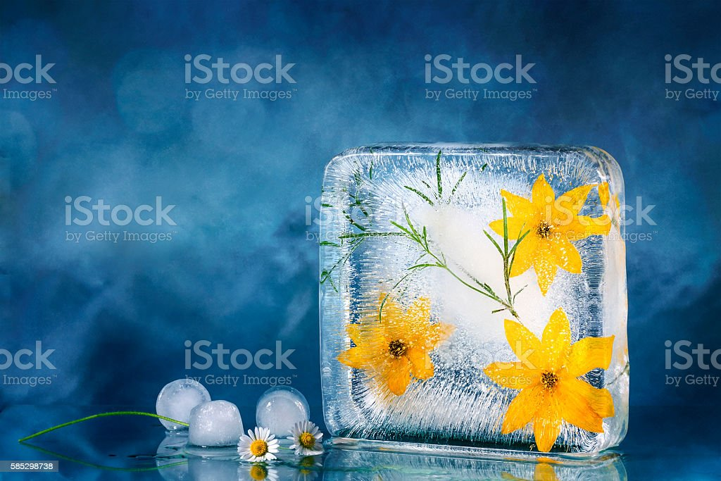 yellow flowers frozen in ice. stock photo