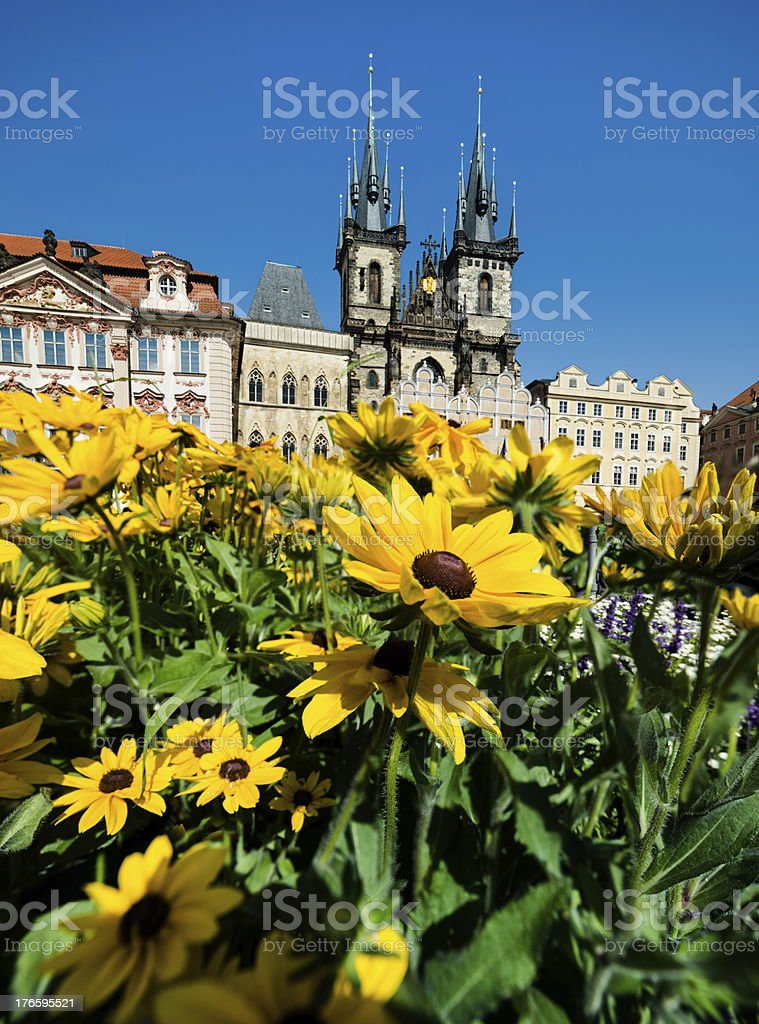 Yellow flowers in front of Maria's Church, Prague stock photo