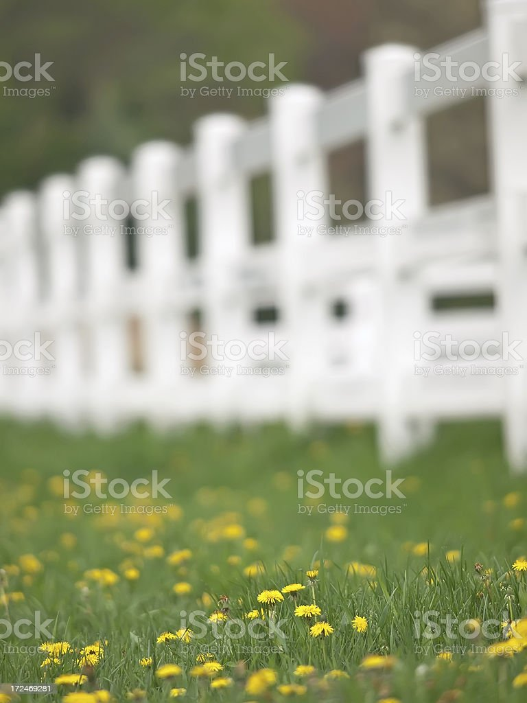 Yellow Flowers in Pasture stock photo