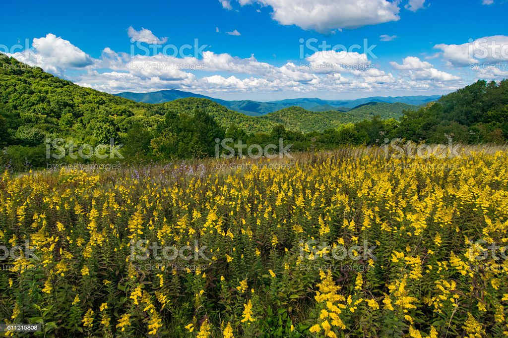 Yellow Flowers in the Appalachian Mountains stock photo