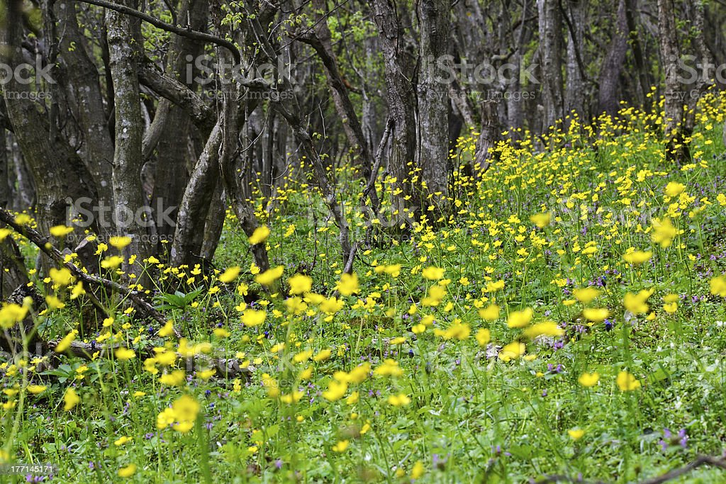 Yellow flowers in the forest royalty-free stock photo