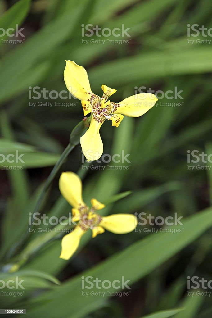 Yellow flowers in the garden. royalty-free stock photo
