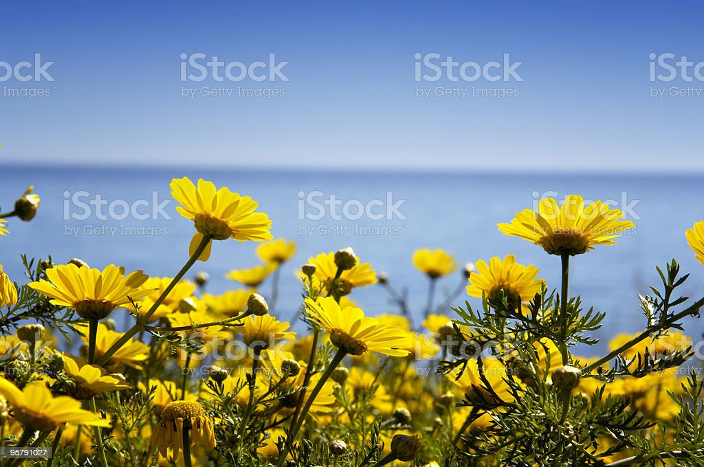 Yellow flowers in the shore stock photo