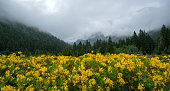 Yellow flowers in valley