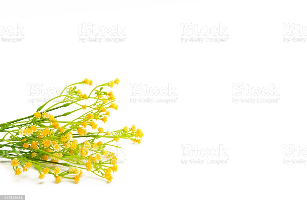 Yellow flowers isolated on white background stock photo