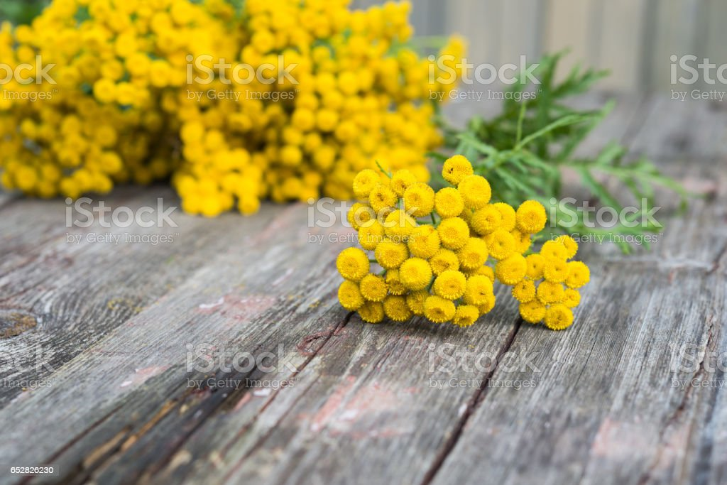 Yellow flowers. Medicinal plants. Twigs of a herb Tansy stock photo