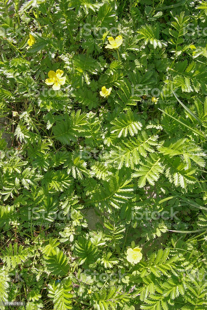 yellow flowers on a green background stock photo