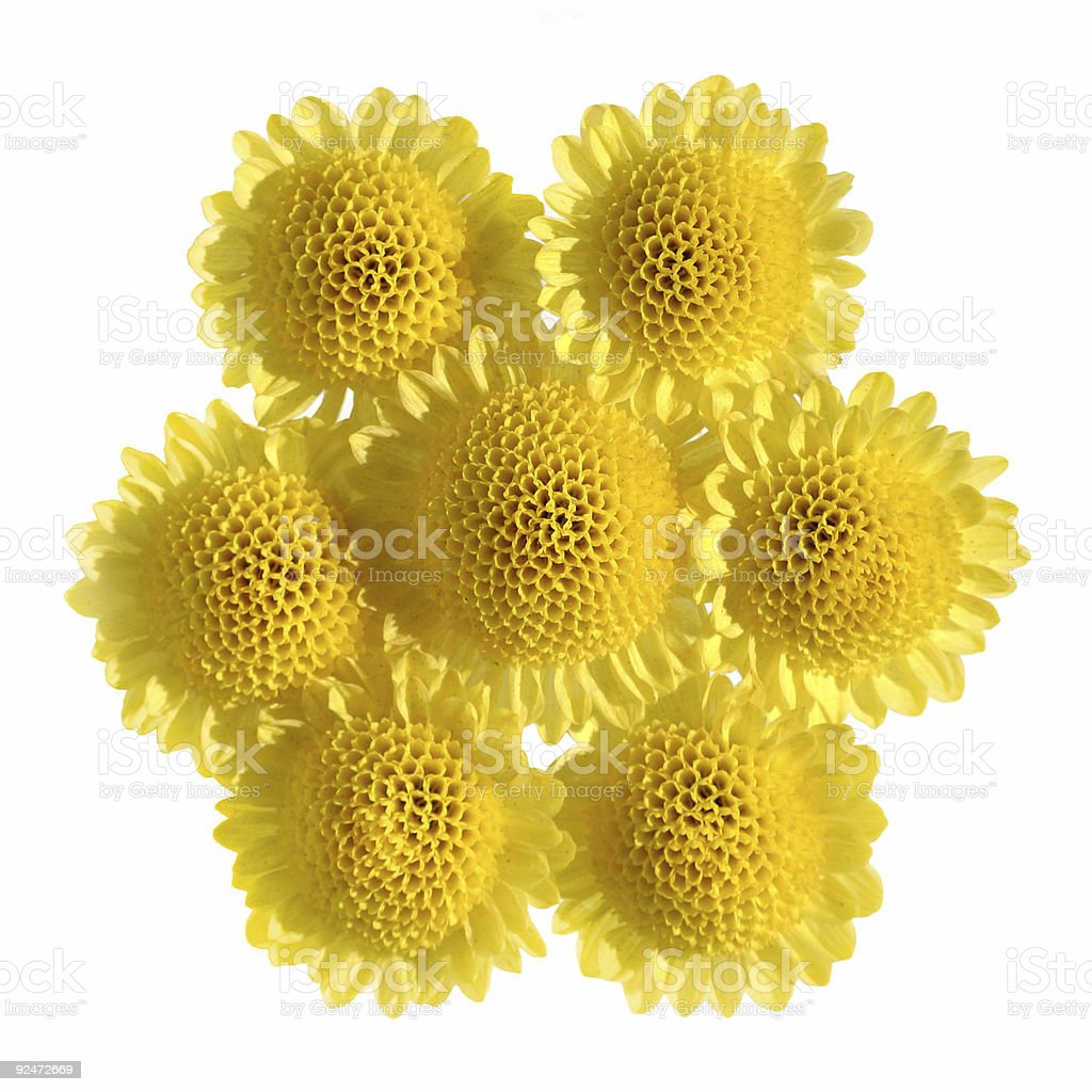 Yellow flowers pentagonal royalty-free stock photo