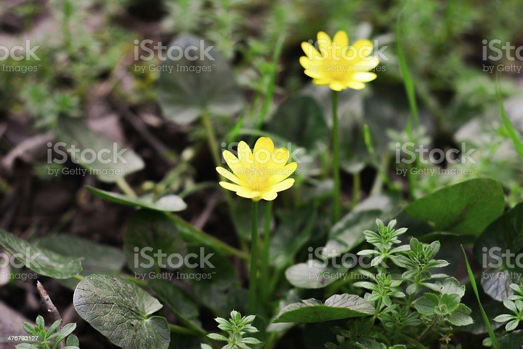 Gelbe Blumen Lizenzfreies stock-foto