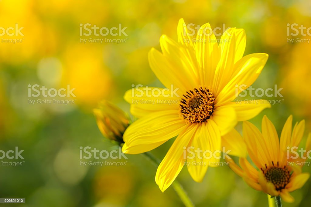 Yellow Flowers stock photo