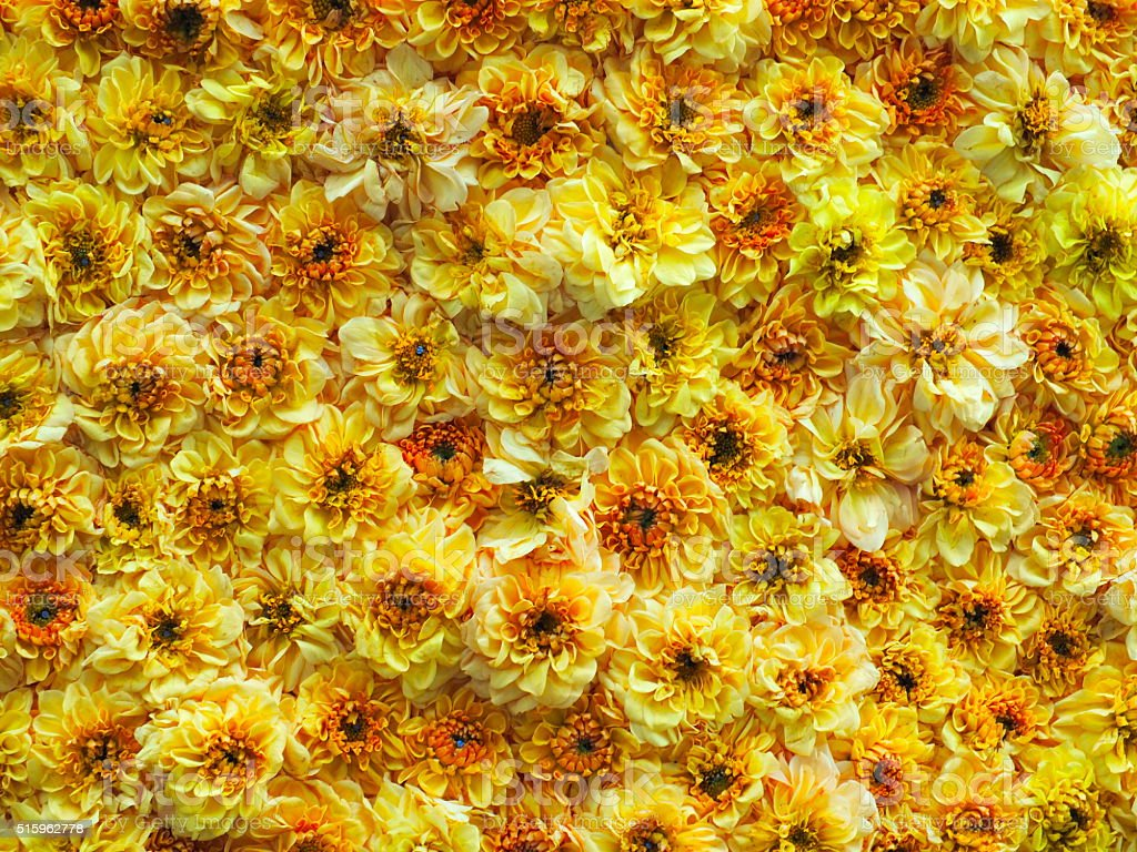 노란색 꽃 royalty-free 스톡 사진
