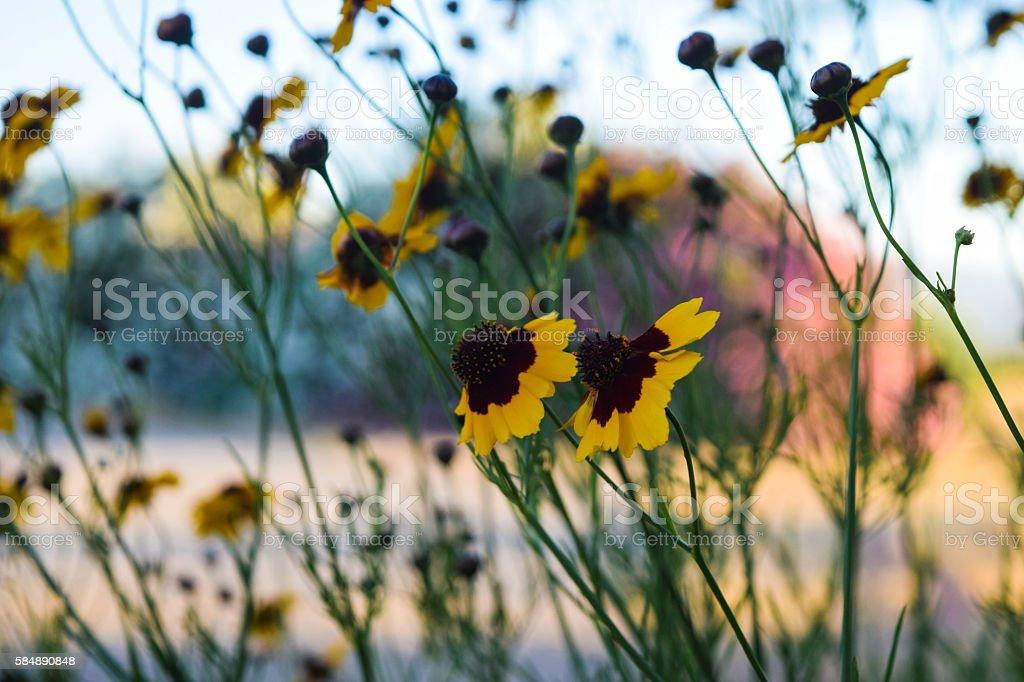Fiori gialli  foto stock royalty-free