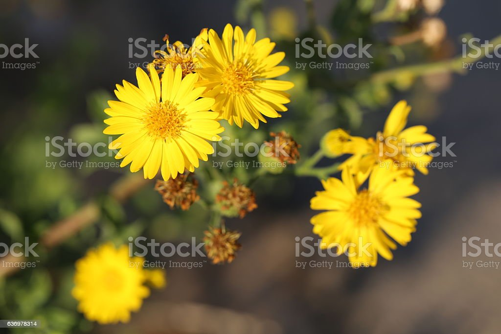 Yellow Flowers, Top View. stock photo