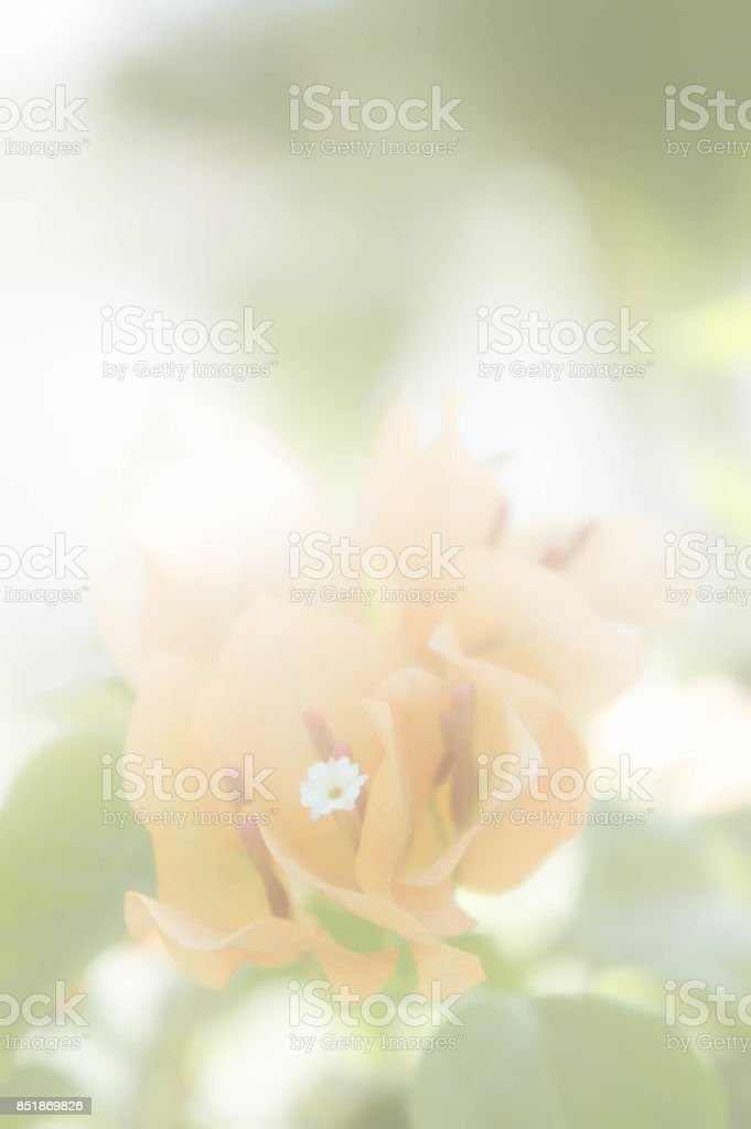 yellow flowers vintage with white filter stock photo