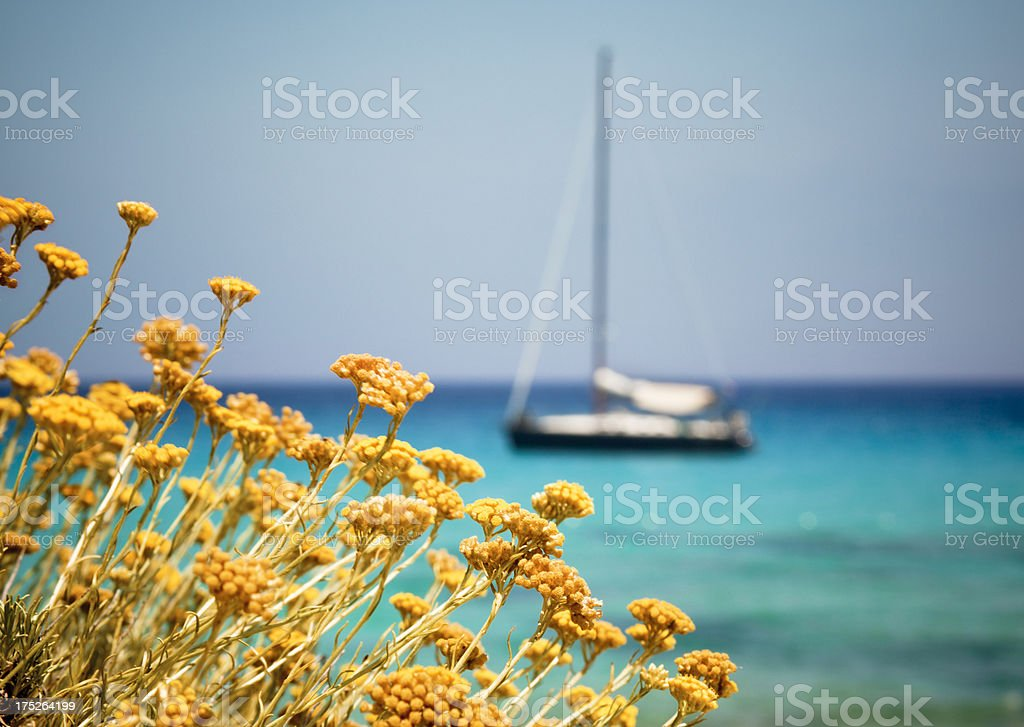 Yellow Flowers With Ship Over Sea In The Background royalty-free stock photo