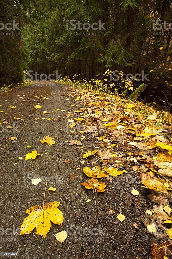 yellow folio on road royalty-free stock photo