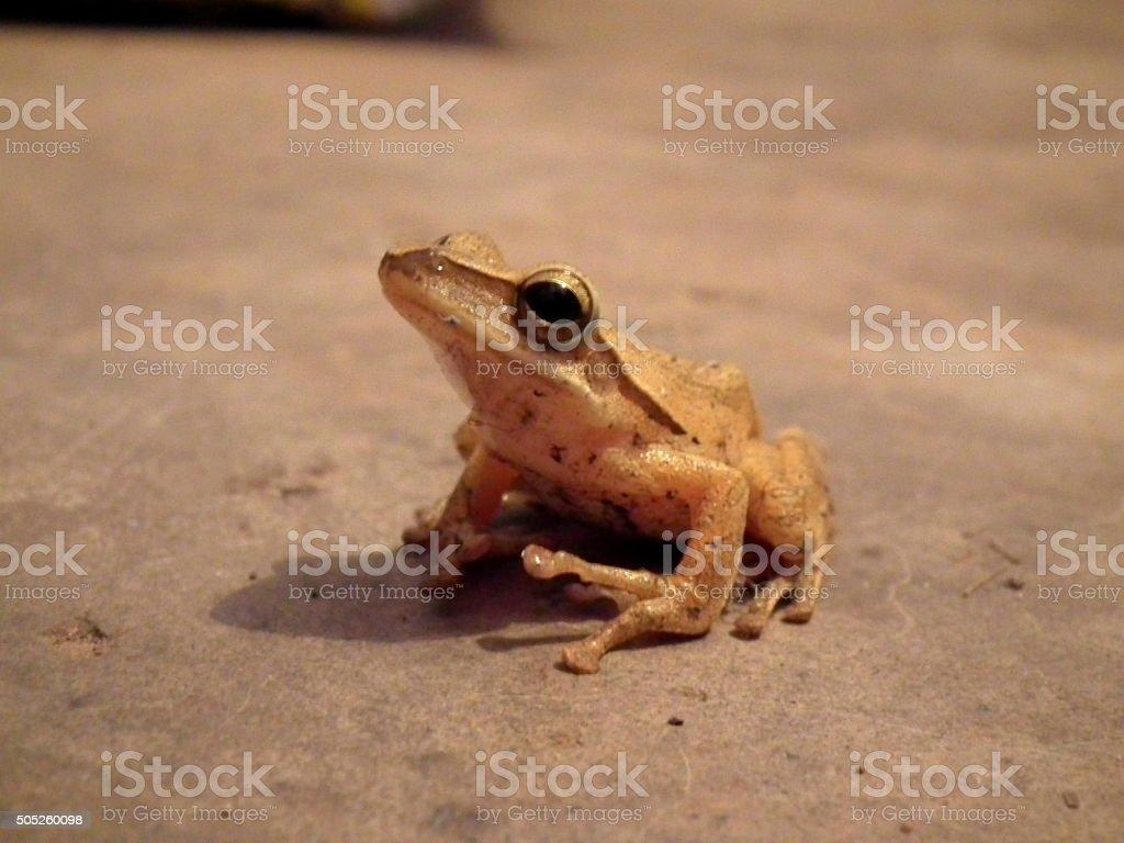 Yellow frog close up stock photo