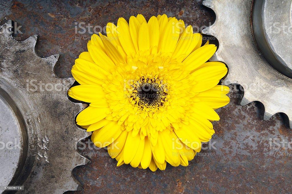 Yellow gerbera between machinery cogs royalty-free stock photo