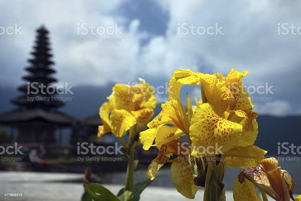 Yellow gladiolus on the background of Temple Ulun Danau. Bali royalty-free stock photo