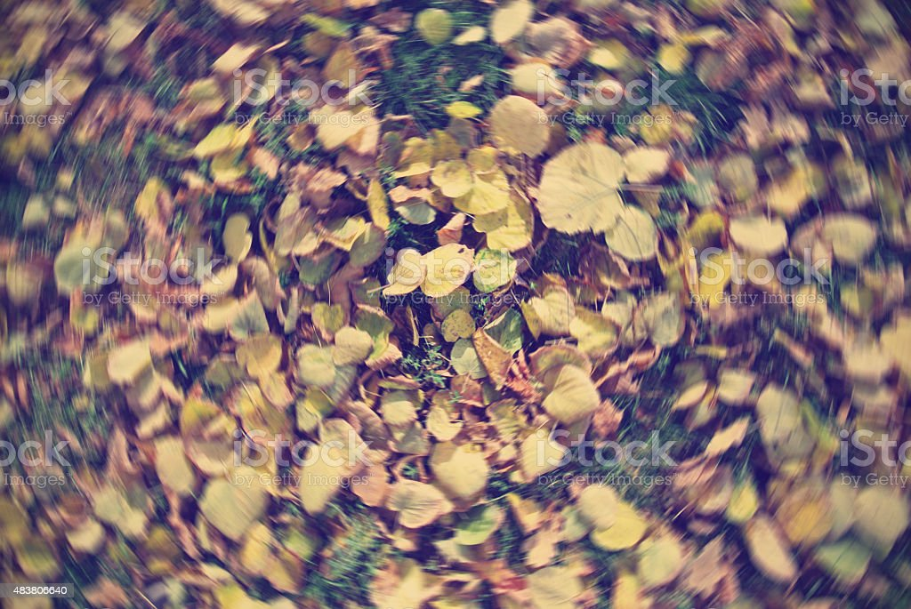 Yellow, golden leaves on the grass with radial blur; retro stock photo