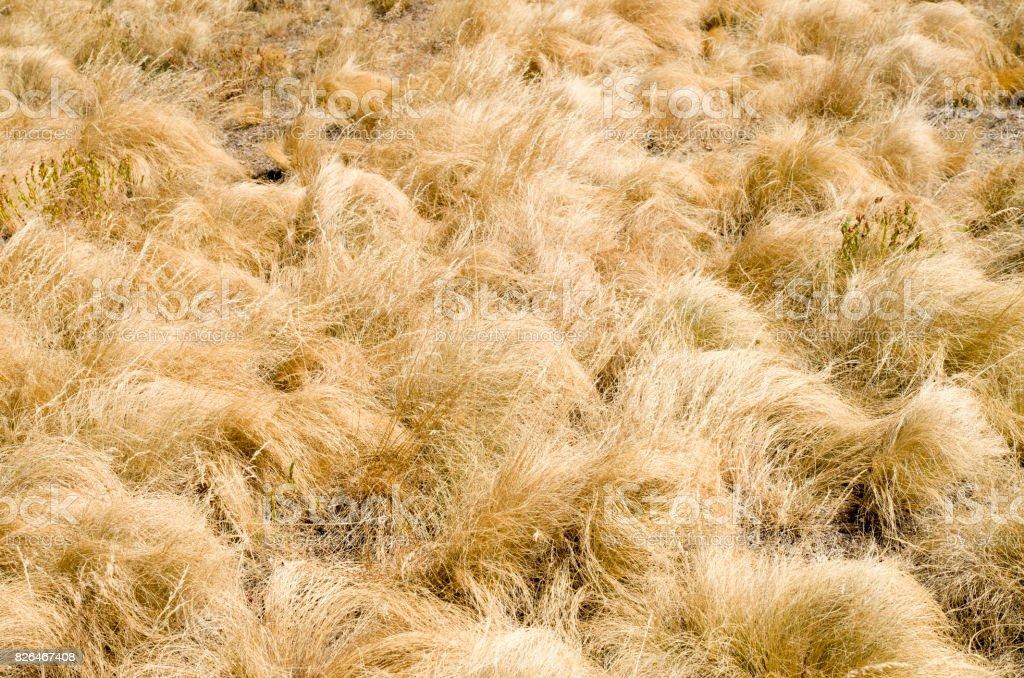 Yellow grass of mountain meadow in the fall closeup stock photo