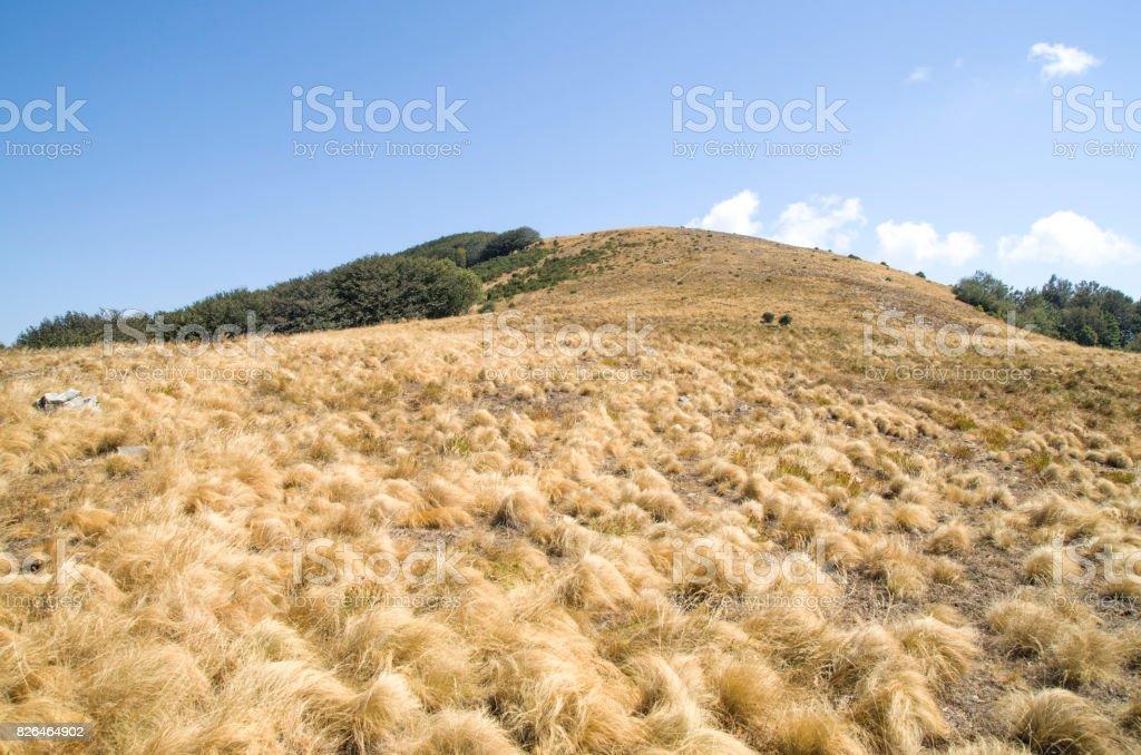Yellow grass of ridge mountain meadow in the fall, Bulgaria stock photo