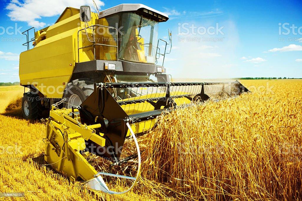 yellow harvester in work stock photo