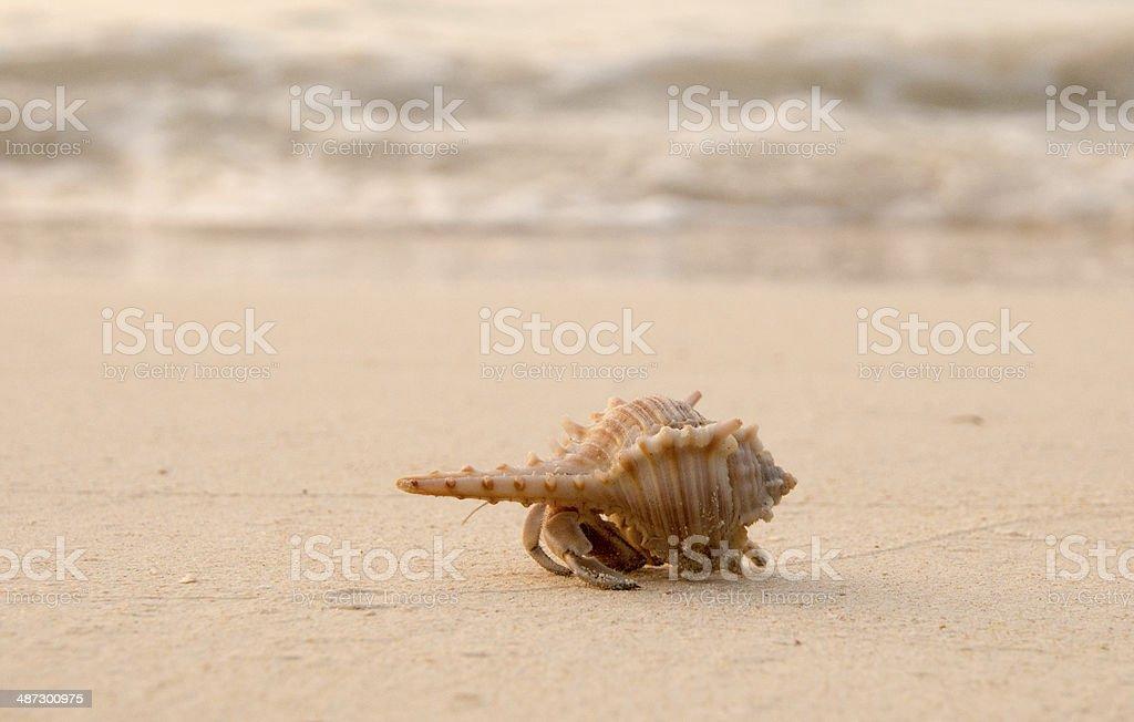 yellow hermit crab royalty-free stock photo