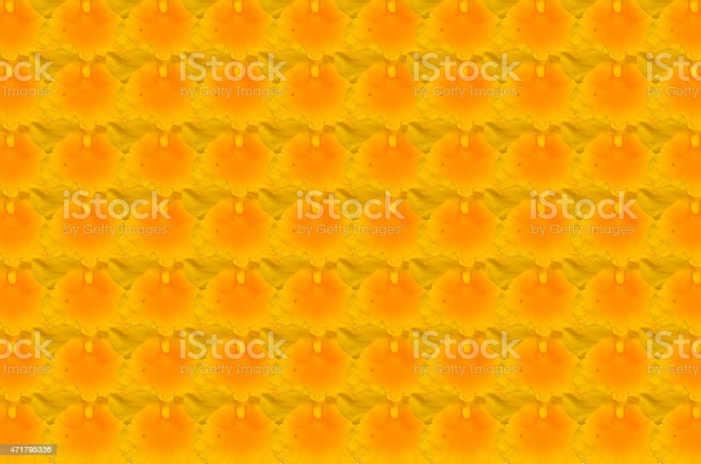 YelloW Honey fragrant orchid stock photo