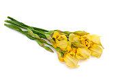yellow iris isolated on white background