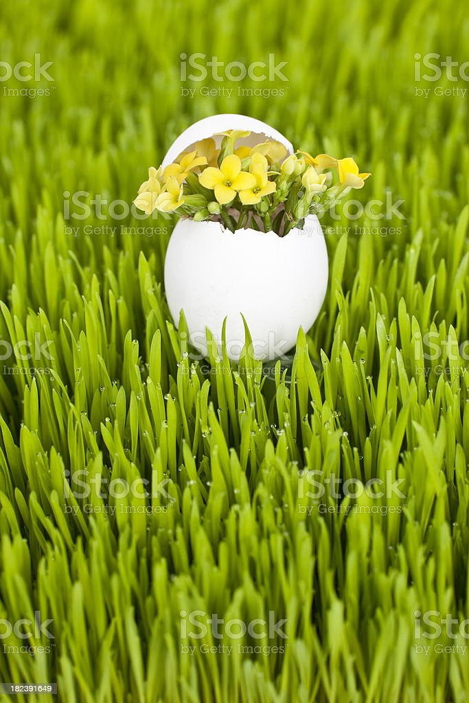 Yellow Kalanchoe in an Egg Shell on Spring Grass royalty-free stock photo