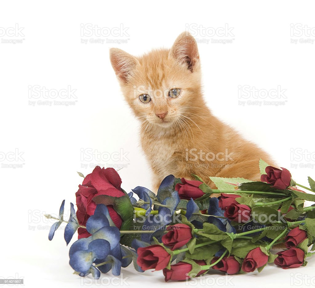 Yellow kitten and flowers stock photo