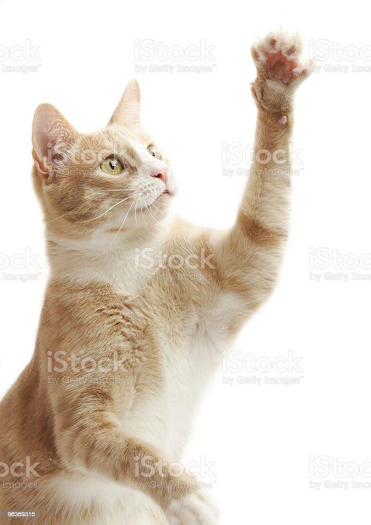 yellow kitten stock photo